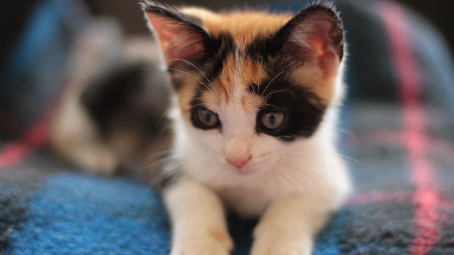Природа Животные, Кошки 27688370