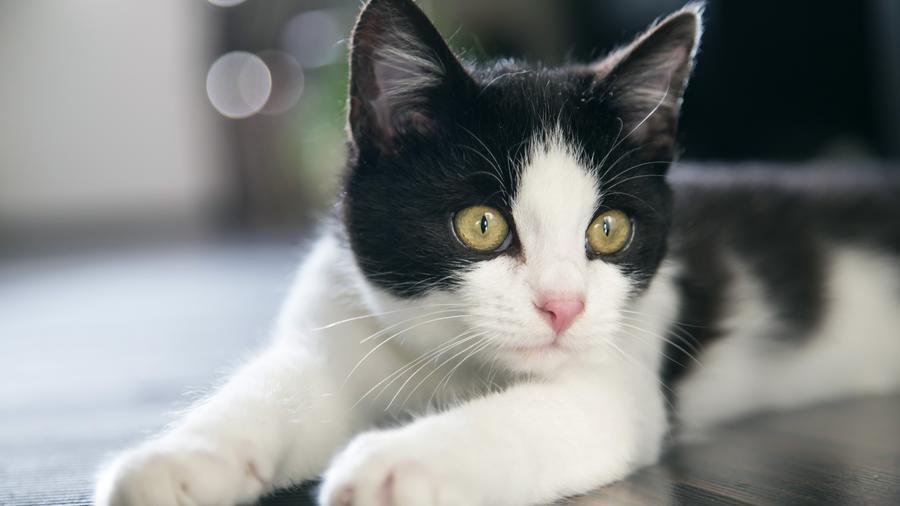 Природа Животные, Кошки 178172182