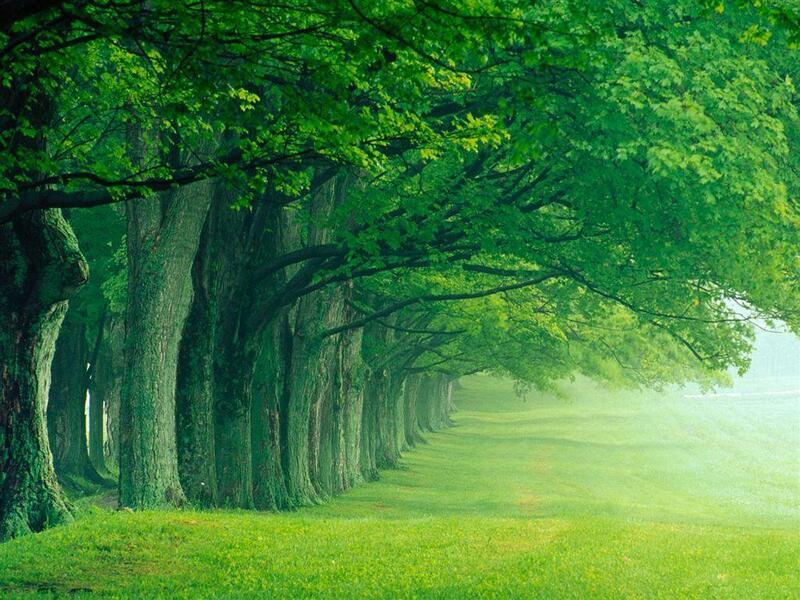Природа Forest, Mountains, Fields, Autumn, Spring, Summer, Winter, flowers, Sunset, Sunrise id408437109