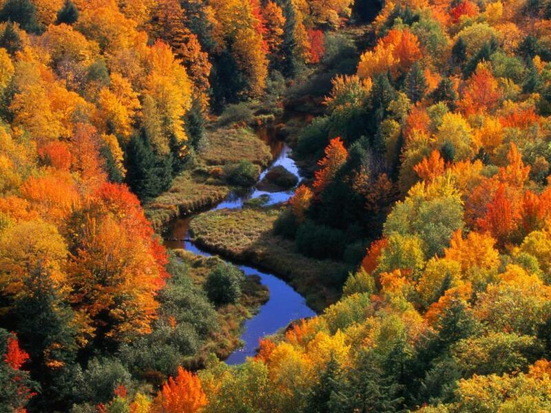 Природа Forest, Mountains, Fields, Autumn, Spring, Summer, Winter, flowers, Sunset, Sunrise id1791499934