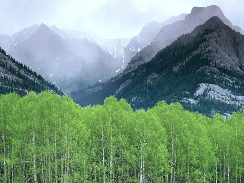 Природа Forest, Mountains, Fields, Autumn, Spring, Summer, Winter, flowers, Sunset, Sunrise id281332414