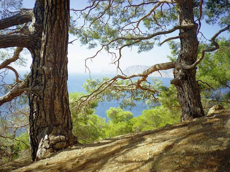Природа Forest, Mountains, Fields, Autumn, Spring, Summer, Winter, flowers, Sunset, Sunrise id368319317