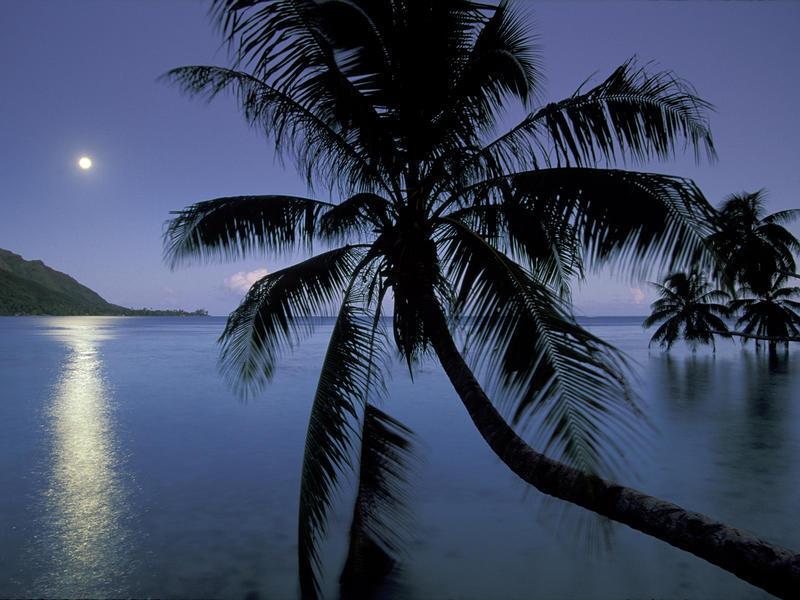 Природа Пальми, Захід сонця, Схід сонця, Море, Острови 598248283