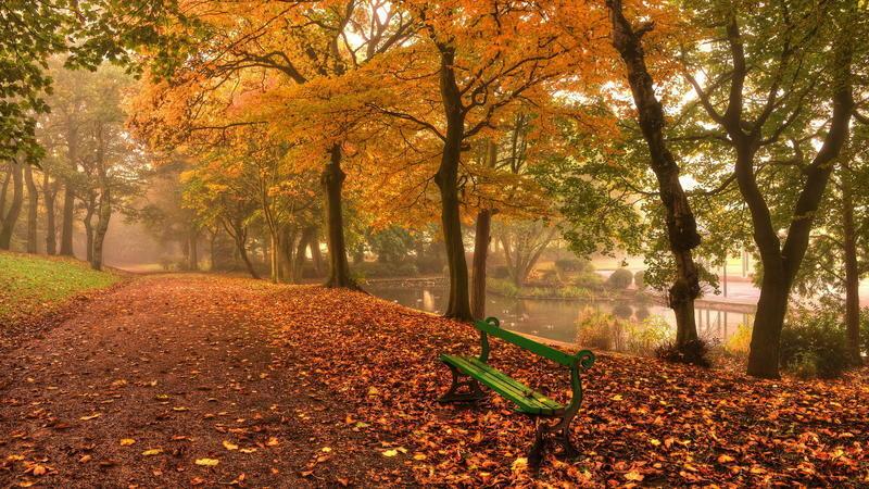Природа Forest, Autumn, Desktop Wallpaper 1412280326