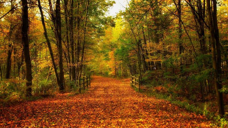 Природа Forest, Autumn, Desktop Wallpaper 691370884
