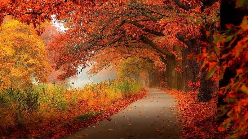 Природа Лес, Осень, Обои для рабочего стола 1130273778