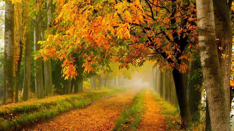 Природа Forest, Autumn, Desktop Wallpaper 2013177402