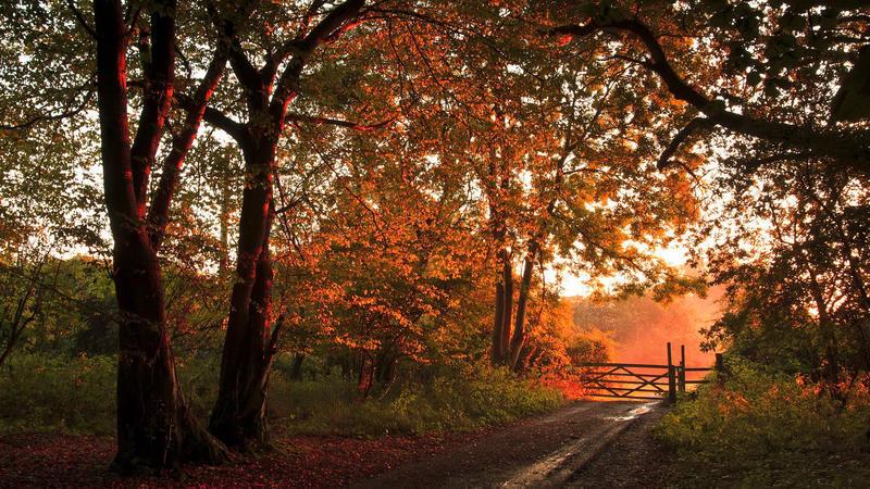 Природа Ліс, Осінь, Шпалери для робочого столу 162830904