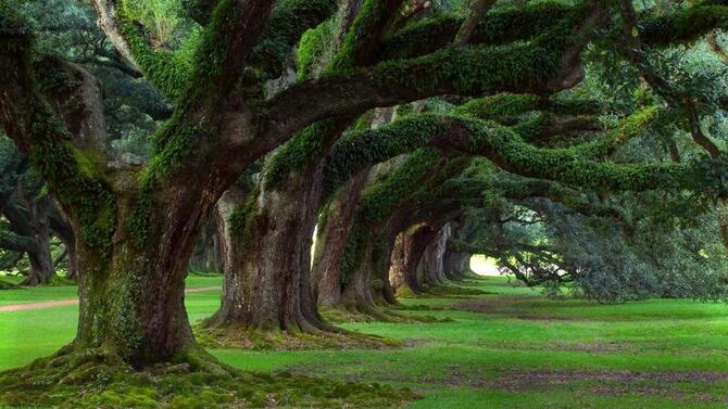 Природа Ліси, Гори, Ріки, Поля, Озера, Дороги 1327345794