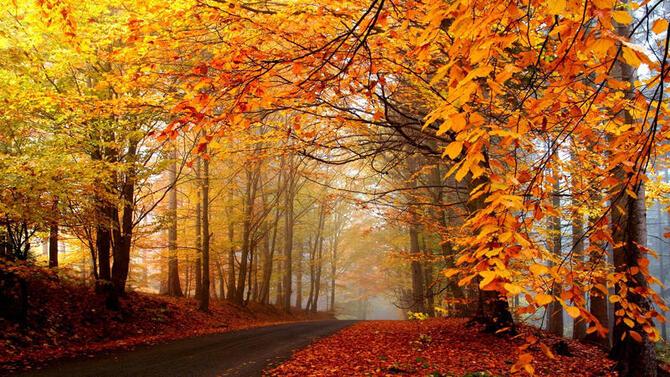 Природа Лес, Осень, Обои для рабочего стола 1253503608