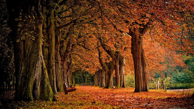 Природа Ліс, Осінь, Шпалери для робочого столу 320686488