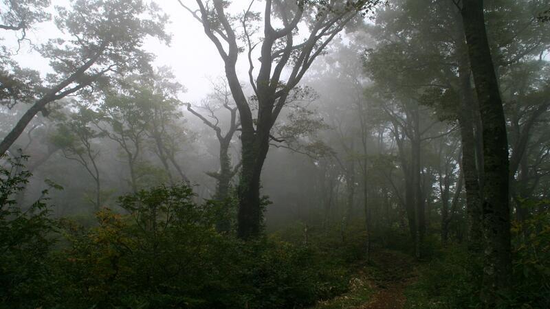 Природа Ліси, Гори, Ріки, Поля, Озера, Дороги 1853796023