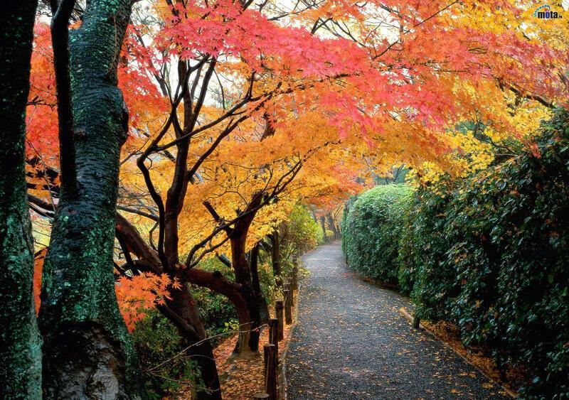 Природа Леса, Горы, Поля, Осень, Весна, Лето, Зима, Цветы, Закат солнца, Восход солнца id1829305154