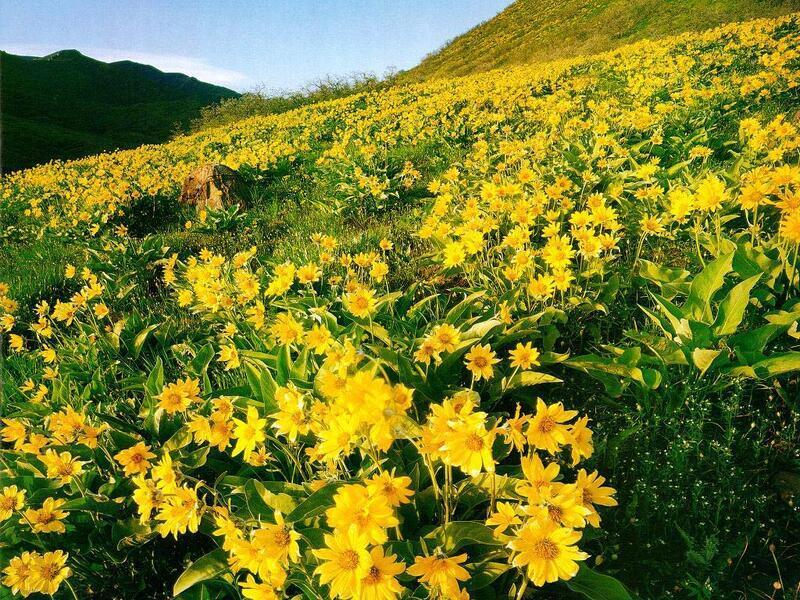 Природа Леса, Горы, Поля, Осень, Весна, Лето, Зима, Цветы, Закат солнца, Восход солнца id2043175798