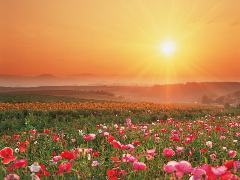 Природа Леса, Горы, Поля, Осень, Весна, Лето, Зима, Цветы, Закат солнца, Восход солнца id321031725