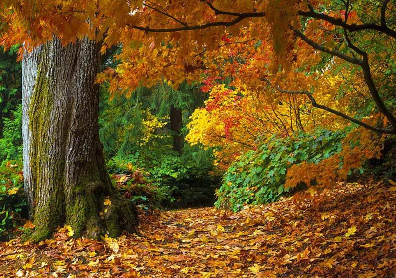 Природа Леса, Горы, Поля, Осень, Весна, Лето, Зима, Цветы, Закат солнца, Восход солнца id393271083