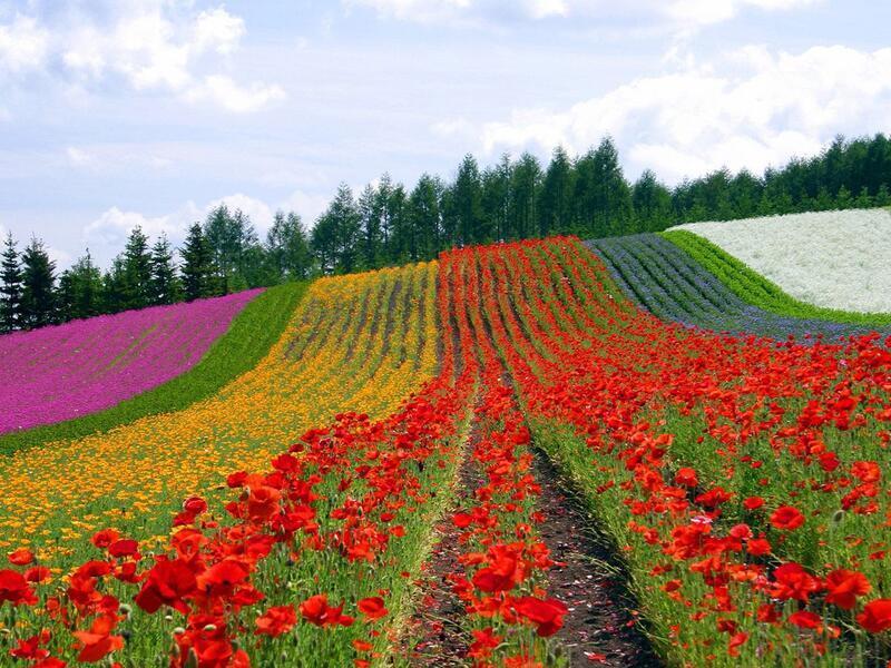 Природа Леса, Горы, Поля, Осень, Весна, Лето, Зима, Цветы, Закат солнца, Восход солнца id933271334