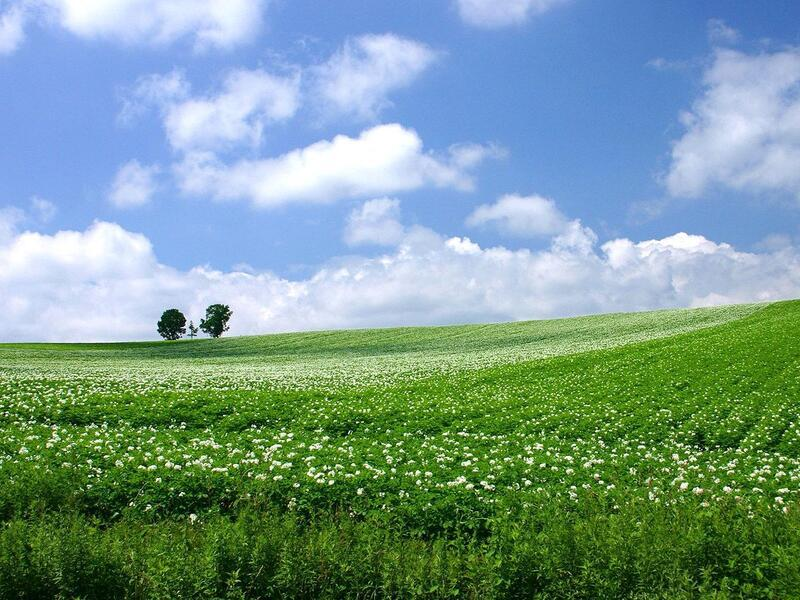 Природа Леса, Горы, Поля, Осень, Весна, Лето, Зима, Цветы, Закат солнца, Восход солнца id87422478