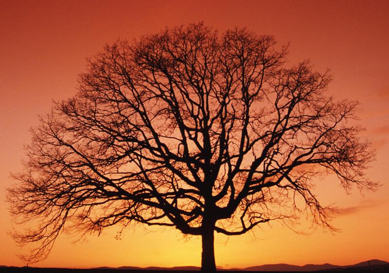 Природа Ліси, Гори, Поля, Осінь, Весна, Літо, Зима, Квіти, Захід сонця, Схід сонця id1388049190