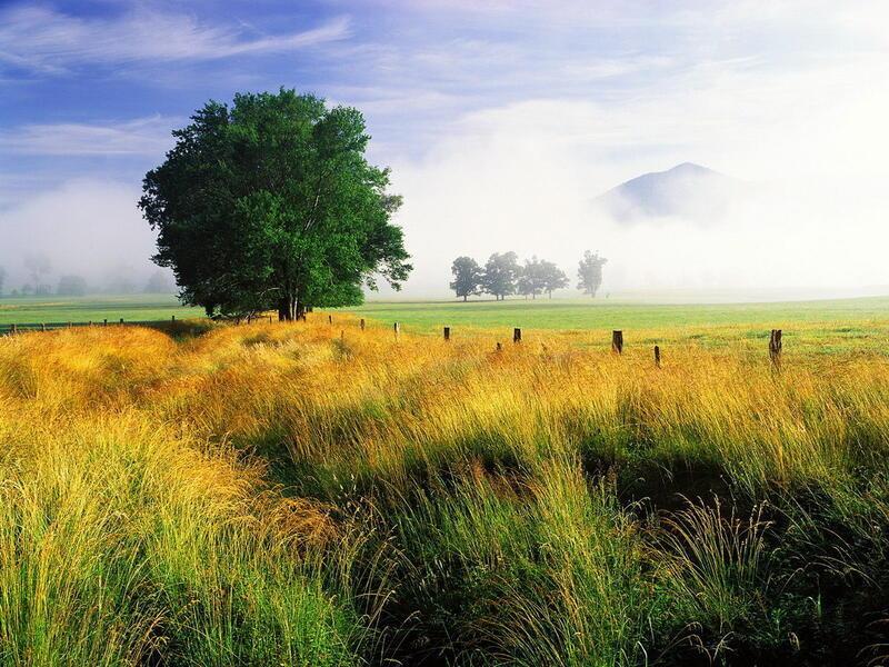Природа Ліси, Гори, Поля, Осінь, Весна, Літо, Зима, Квіти, Захід сонця, Схід сонця id210902094