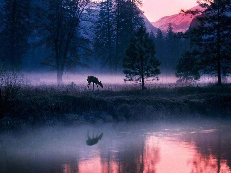 Природа Ліси, Гори, Поля, Осінь, Весна, Літо, Зима, Квіти, Захід сонця, Схід сонця id73002848