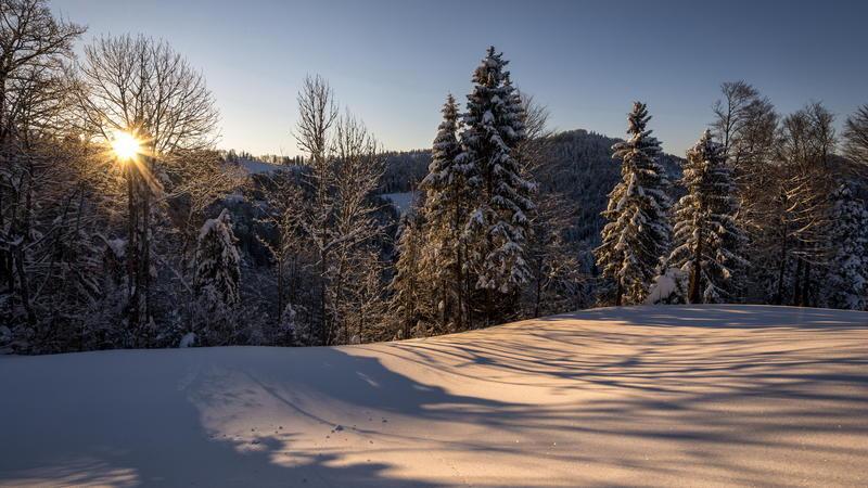Природа Nature, Forest, Winter, Sunset, Sunrise 1529561366