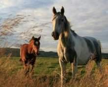 Притча про двох коней
