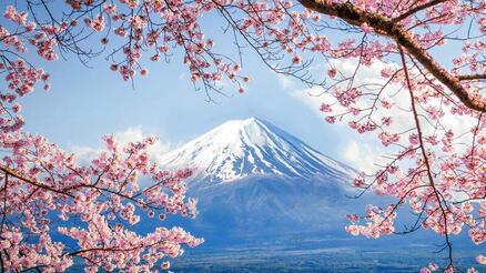 Природа Wallpapers Sakura blossom, Wallpapers Japanese Sakura, Wallpapers flowers, Wallpapers Japan id2077843952