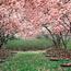 Природа Forest, Mountains, Fields, Autumn, Spring, Summer, Winter, flowers, Sunset, Sunrise id2039714622