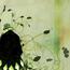 Аніме Кращі фотошпалери Аніме на робочий стіл, Блич, Bleach, ブリーチ, Магазинчик Урахары Киске, 浦原 喜助, Urahara Kisuke, Кискэ Ураха id1291536773