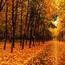 Природа Лес, Осень, Обои для рабочего стола 873467938