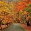 Природа Ліс, Осінь, Шпалери для робочого столу 492521237