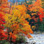 Природа Леса, Горы, Поля, Осень, Весна, Лето, Зима, Цветы, Закат солнца, Восход солнца id532099023