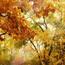 Природа Ліси, Гори, Поля, Осінь, Весна, Літо, Зима, Квіти, Захід сонця, Схід сонця id1781291996
