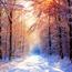 Природа Кращі фотошпалери зими на робочий стіл, Шпалери для робочого столу, Зима, Ліси, Захід сонця, Схід сонця id403661560