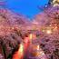 Природа Wallpapers Sakura blossom, Wallpapers Japanese Sakura, Wallpapers flowers, Wallpapers Japan id5174897
