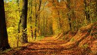 Природа Ліс, Осінь, Шпалери для робочого столу 1385699653