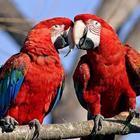 Про що папугаї думають?