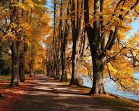 Природа Forest, Autumn, Desktop Wallpaper 1564727818
