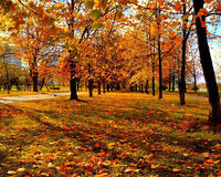 Природа Лес, Осень, Обои для рабочего стола 1601333457