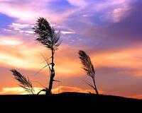 Природа Леса, Горы, Поля, Осень, Весна, Лето, Зима, Цветы, Закат солнца, Восход солнца id1774148111