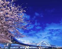 Природа Фотообои Цветение Сакуры, Фотообои японской Сакуры, Фотообои цветы, Фотообои Япония id991268709