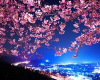 Природа Wallpapers Sakura blossom, Wallpapers Japanese Sakura, Wallpapers flowers, Wallpapers Japan id623678810